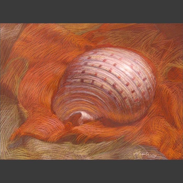 newberry-shell-on-orange-linen-pastel-on-dark-paper