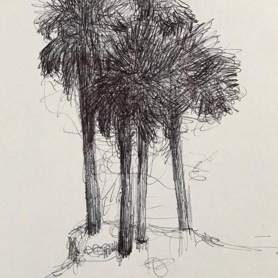 newberry_4_palms_ink
