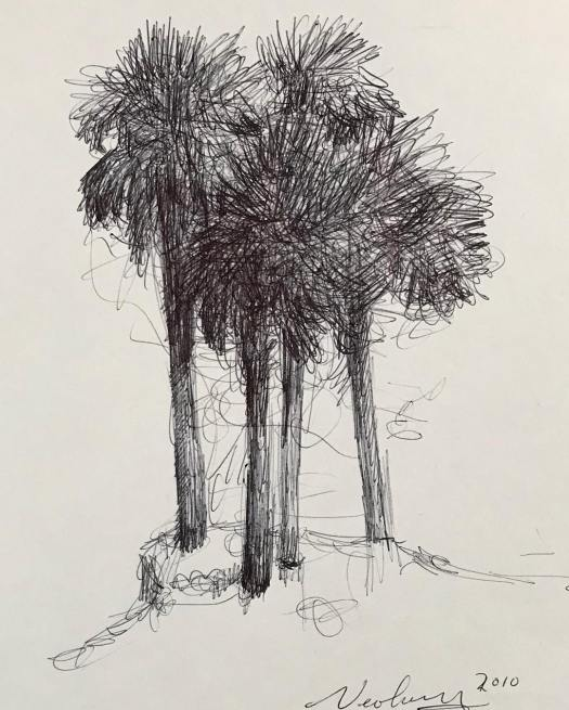 newberry_4_palms_ink