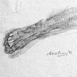 newberry_foot_study_pond_graphite