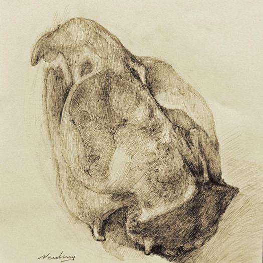 newberry_rodent_skull_graphite