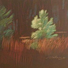 Newberry, Young Pine, pastel