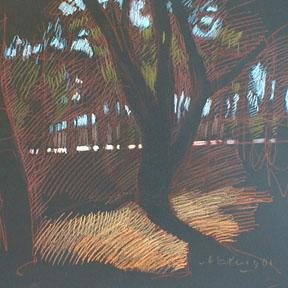 Newberry, Trees in Shadow, pastel