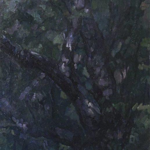 Newberry, Dark Sycamores