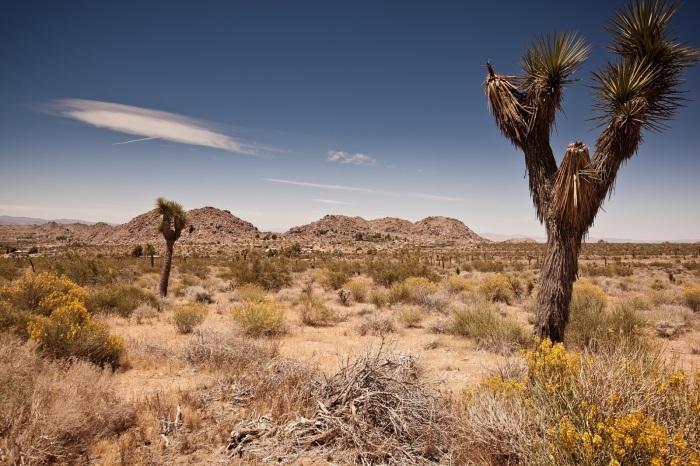 landscape-tree-nature-grass-rock-wilderness